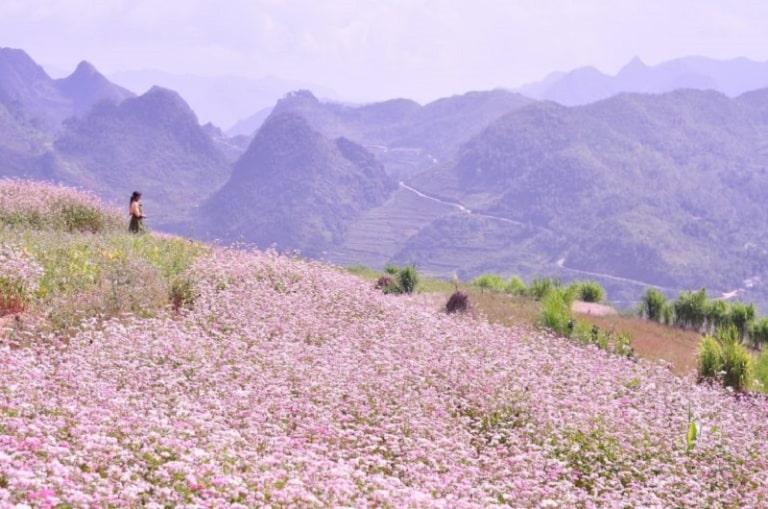 Thiên đường hoa ở Phó Bảng