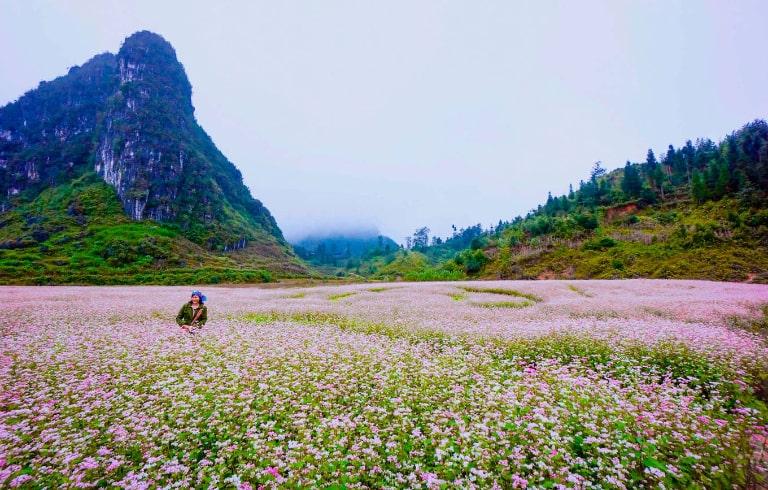 Ngắm núi đá và ngắm hoa