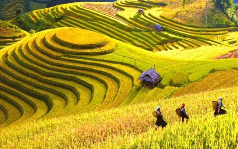 Hà Giang được nhuộm màu vàng óng của lúa chín