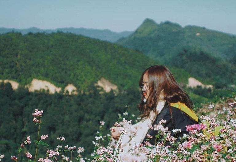 Màu hồng phớt của hoa tam giác mạch bao phủ khắp sườn núi