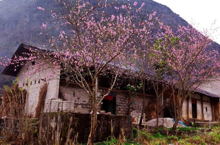 Đặc sớm nhất các loại dịch vụ du lịch tại Hà Giang