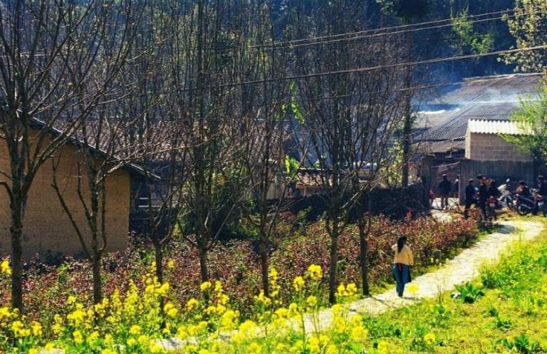 Du lịch tháng 3 vẫn có cơ hội ngắm hoa cải vàng
