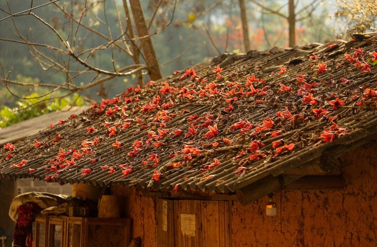 Đến Hà Giang vào tháng 3 sẽ được ngắm hoa gạo