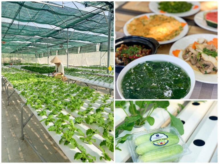 Các nông sản chất lượng cao được thu hoạch