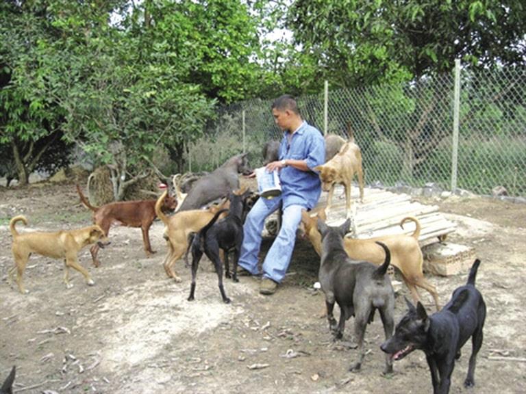 Chất lượng của các trại chó giống Phú Quốc tại Hà Nội nên tìm hiểu kỹ trước khi mua
