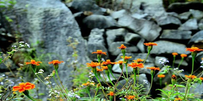 Du lịch Hà Giang tháng 10 để ngắm hoa cúc dại ven đường