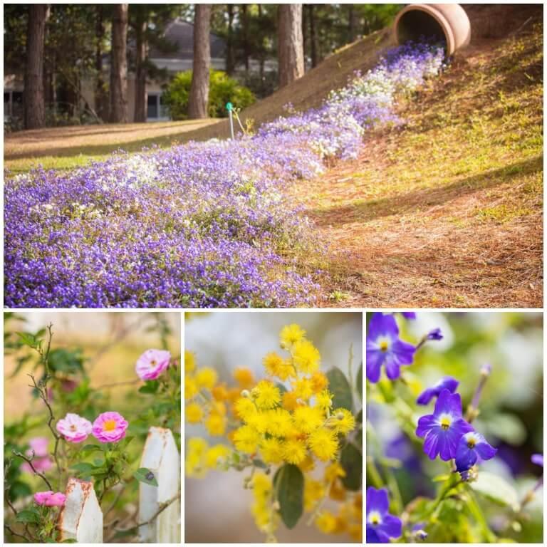 Edensee Resort - Thiên đường hoa rực rỡ sắc xuân