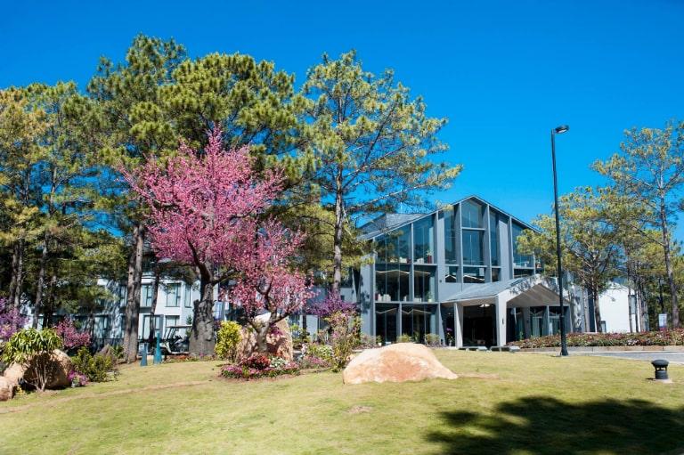 Resort 4 sao Terracotta Đà Lạt ẩn hiện giữa rừng thông