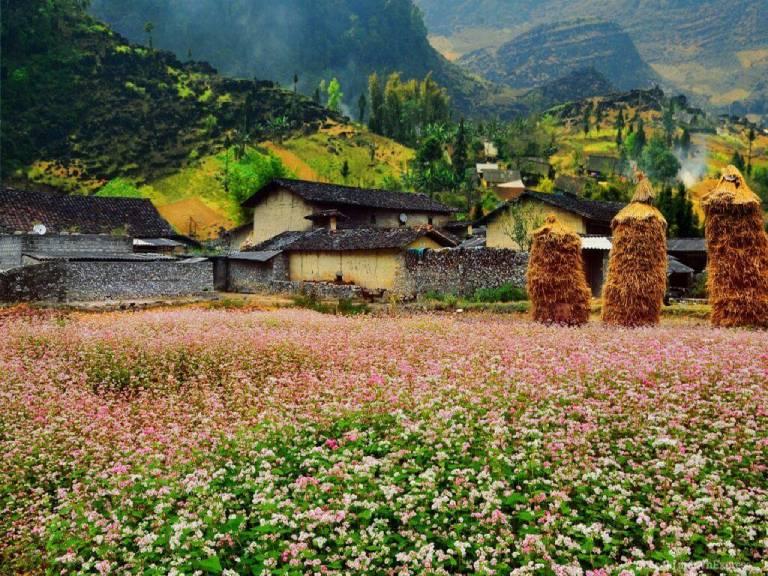 Thung lũng Sủng Là nằm yên bình giữa các dãy núi đá tai mèo cheo leo và đan xen cùng các ngôi nhà trình tường đầy ấn tượng