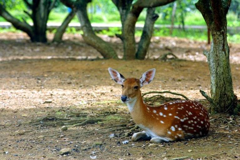 Vườn thú V resort với nhiều động vật quý hiếm